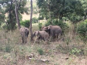 Auf Safari